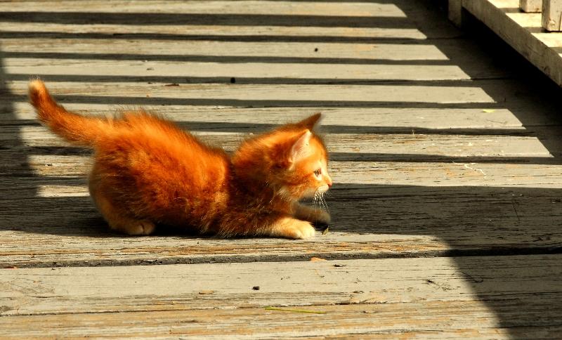 Kitten on the Bridge