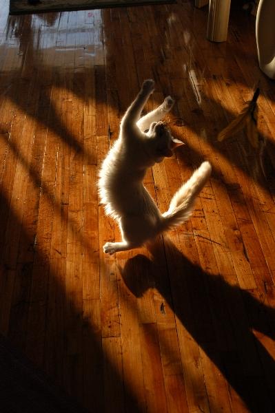 Dance Yoshi