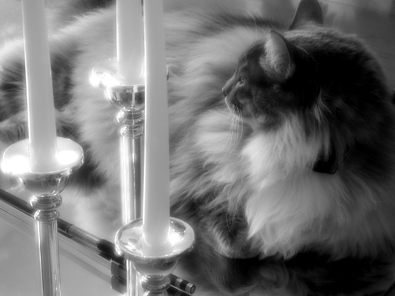 Taz and Candles