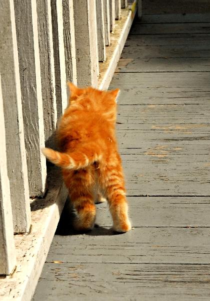 Wrong way Kitten