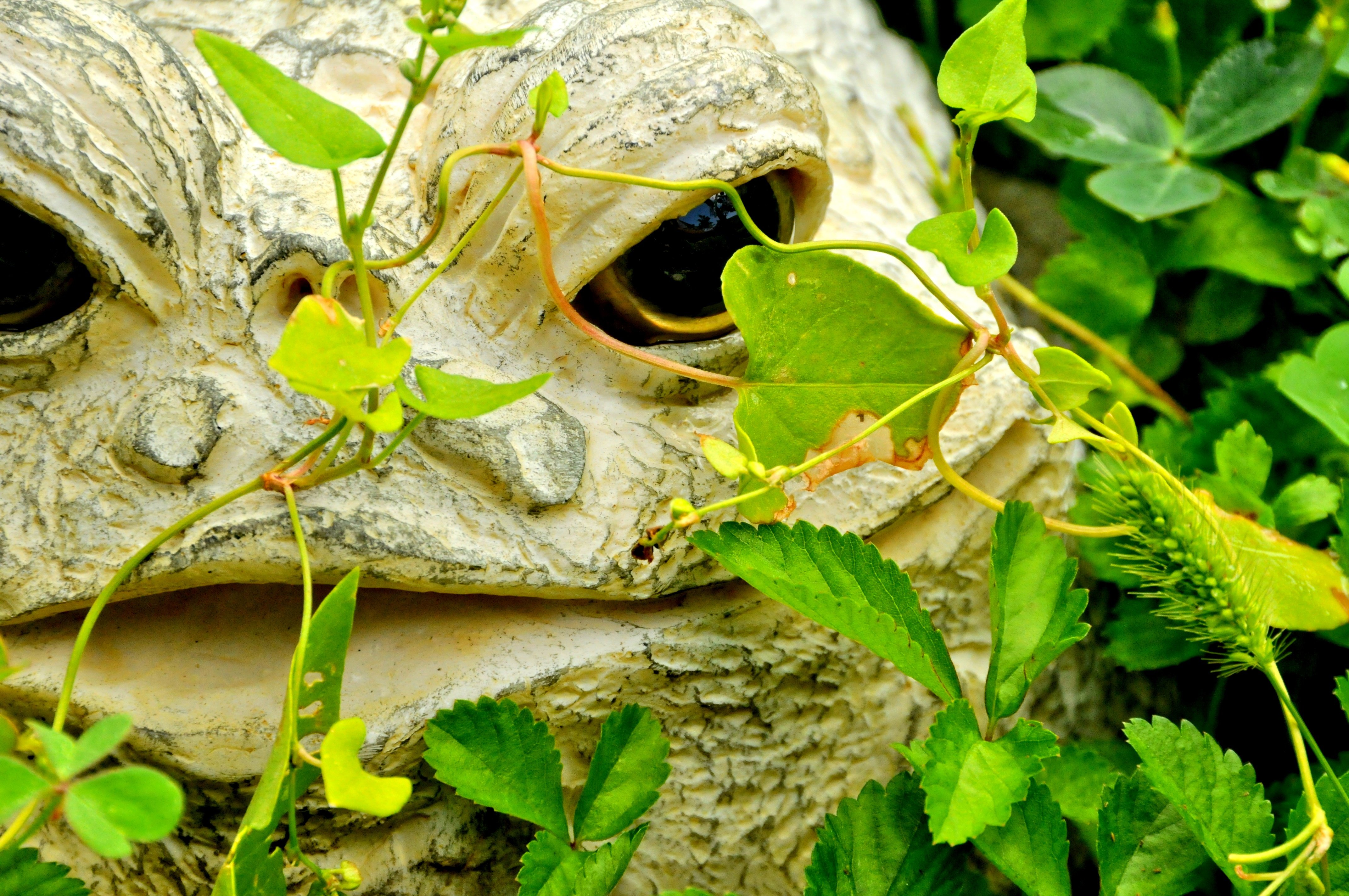 Frog in the Vines